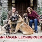 ANFANGEN LEONBERGERS